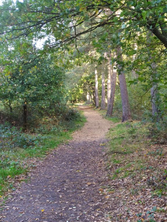 mini_Schinveldse-bos-herfstwandeling-6