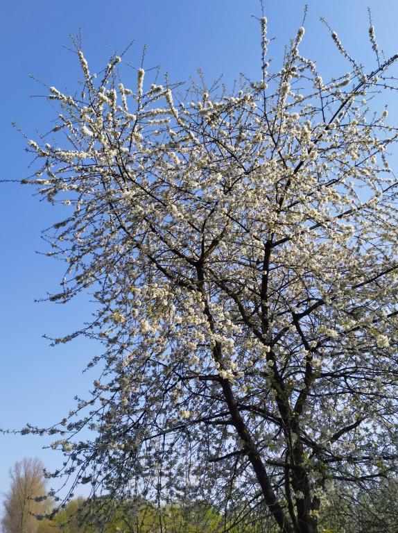 Susterseel-voorjaar-10