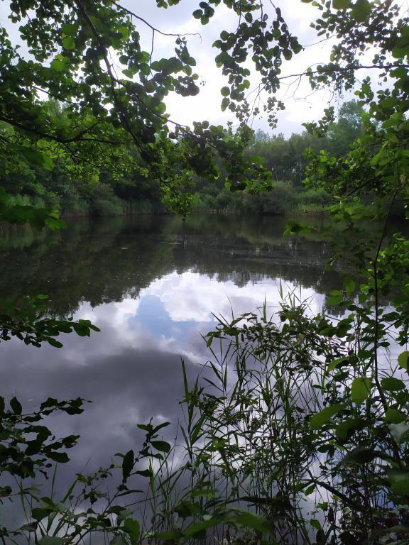 Schinveldse-bos-wandeling-22