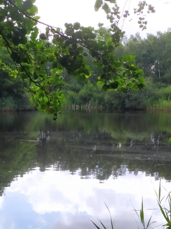 Schinveldse-bos-wandeling-23
