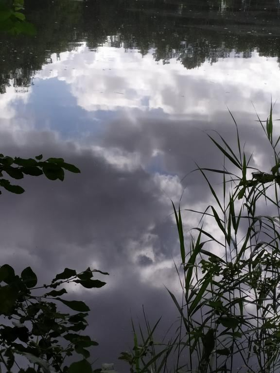 Schinveldse-bos-wandeling-24