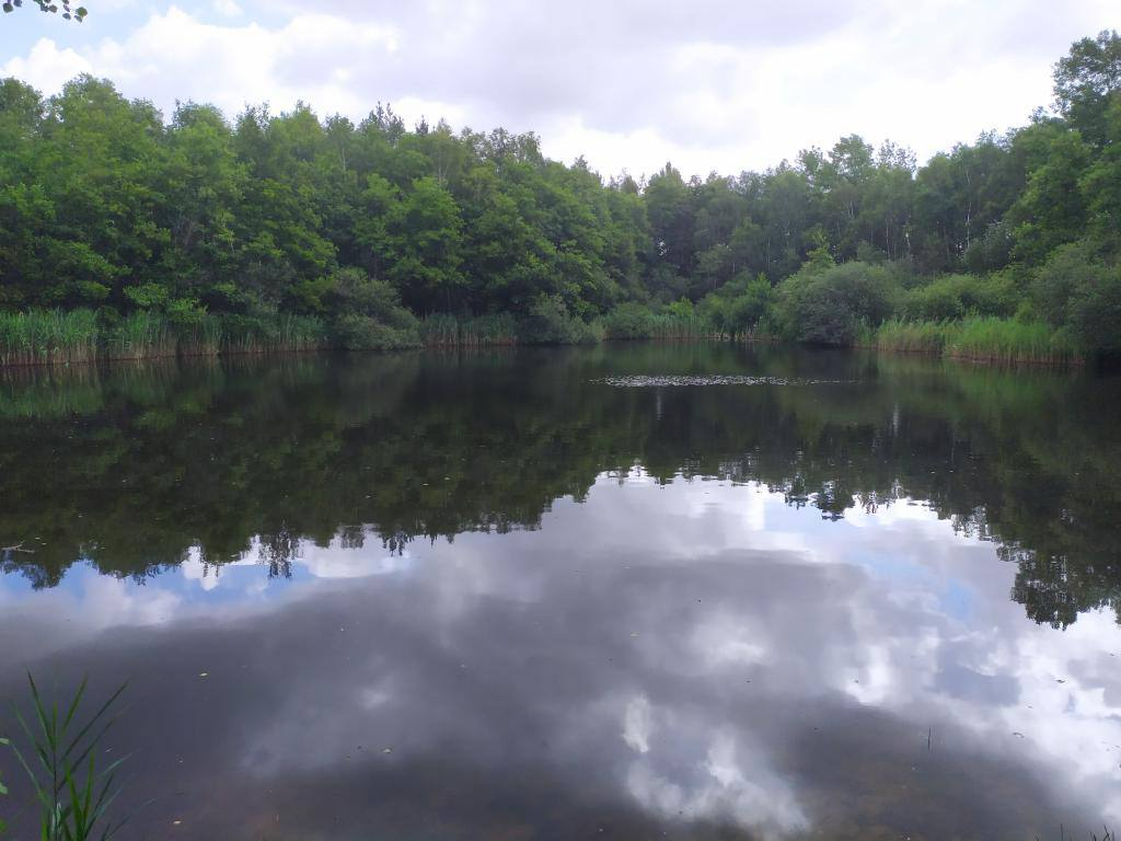 Schinveldse-bos-wandeling-25