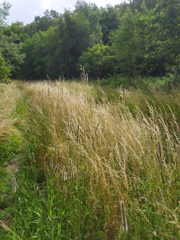 Schinveldse-bos-wandeling-26
