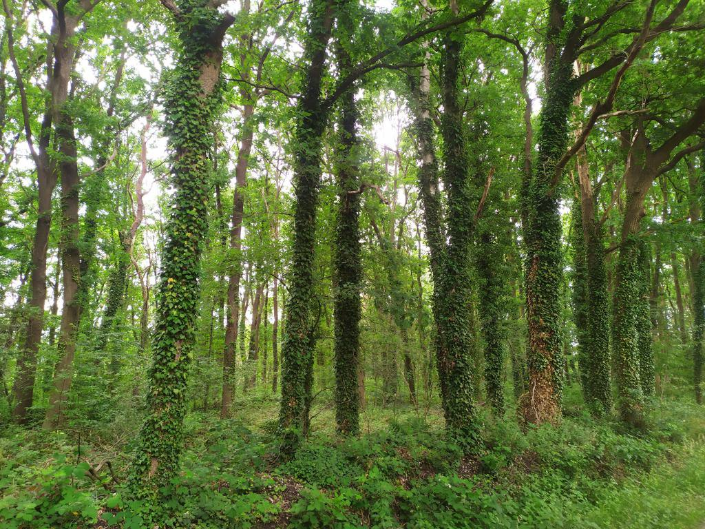 Schinveldse-bos-wandeling-2