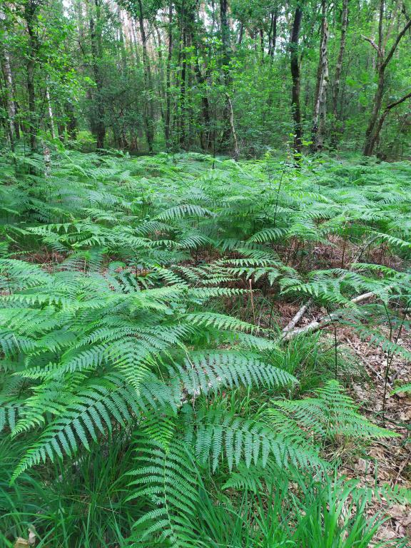 Schinveldse-bos-wandeling-9
