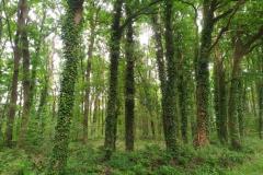 Wandeling Schinveldse bos