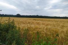 Schinveldse-bos-wandeling-3