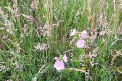Schinveldse-bos-wandeling-5