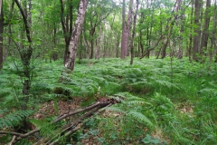 Schinveldse-bos-wandeling-7