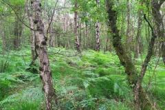Schinveldse-bos-wandeling-8
