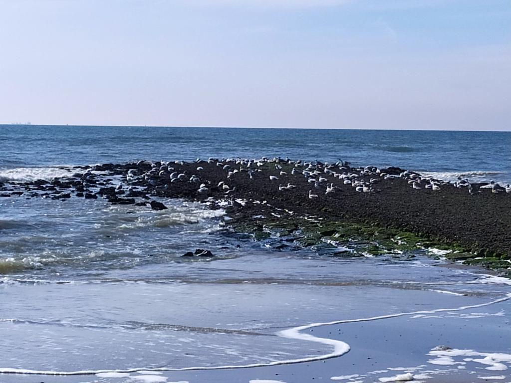 Wandeling-zee-8