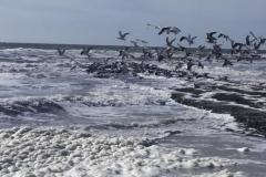 Wandeling Zee Juilanadorp