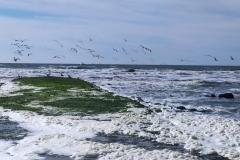 Wandeling-zee-julianadorp-11