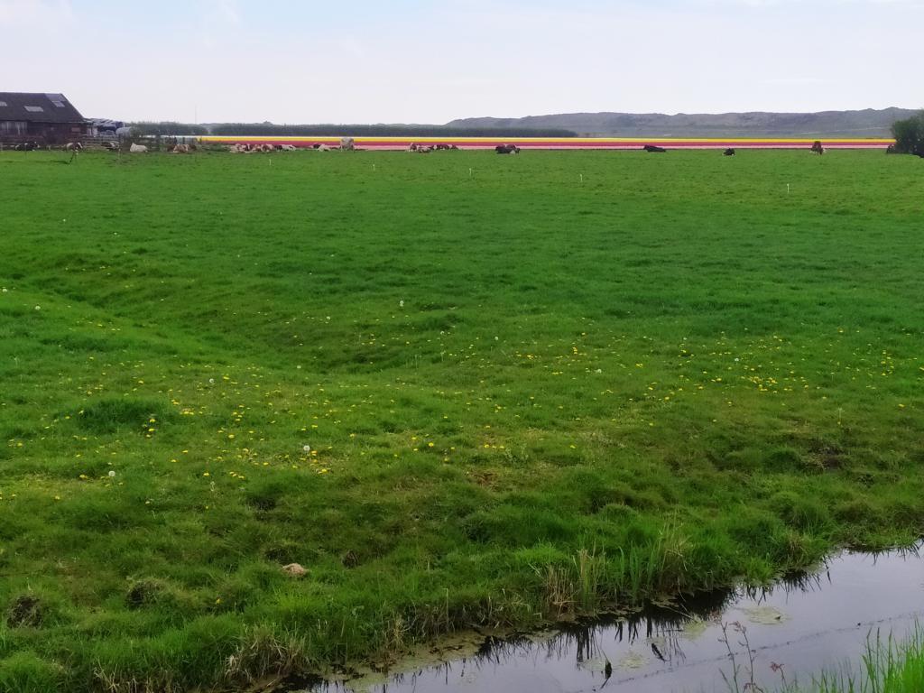 Zwanewater-Callentsoog-21