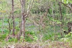 Wandeling Zwanenwater